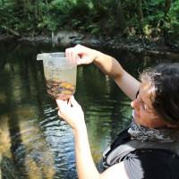 Junge Flussperlmuscheln